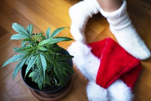 Xmass Cannabis Decoration