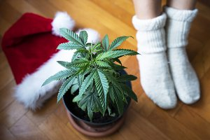 Xmass Cannabis Decoration 2