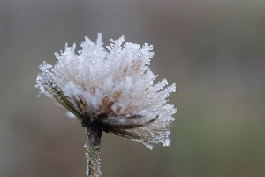Plant in frost. Macro. The sudden
