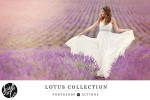 Lotus Action Collection