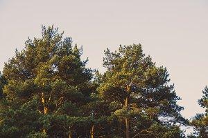 Beautiful summer forest