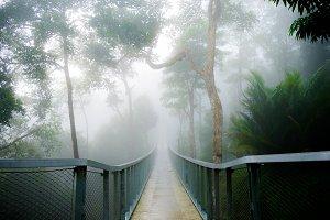 Tropic walk