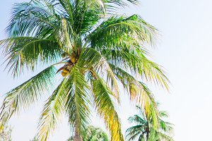 Palm trees on white sand beach. Play