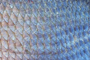 Silver bream scales, natural texture