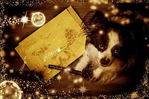 Dog Christmas greeting cards.
