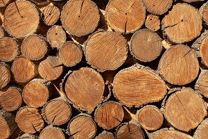 wood round timber background close u