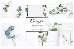 5 Eucalyptus Mini Bundle