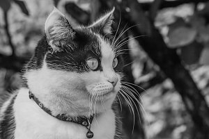 A black and white photo of a