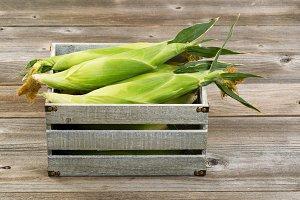 Freshly picked corn in crate