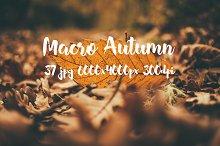 Macro Autumn photo bundle