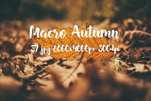 Macro Autumn photo bundle