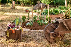 Small and rustic vegetable garden