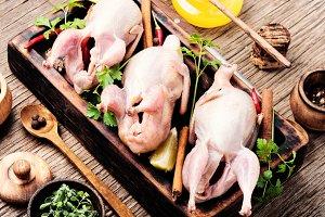 Fresh raw meat quails