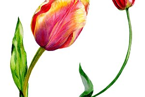 Amazing red tulip flower with green