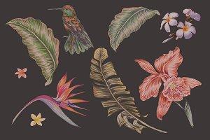 Tropical botanical illustrations