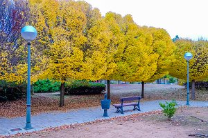 Walk in the park with trees in autum
