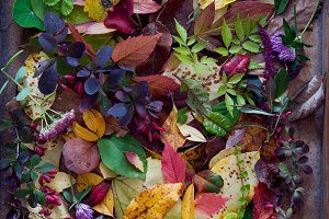 Autumn leaves and berries
