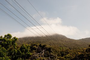 Powerlines & Nature