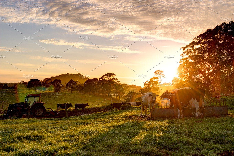 Sunrise On The Farm Animal Photos Creative Market