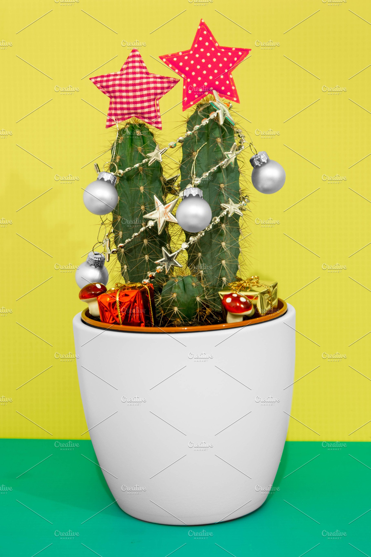 Photo Christmas Cactus Holiday Photos Creative Market