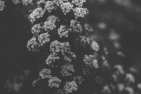 Nature Stock Photos: E+A Store - Flowers black and white