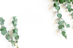 Border frame made of eucalyptus