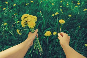 POV image of woman with dandelions