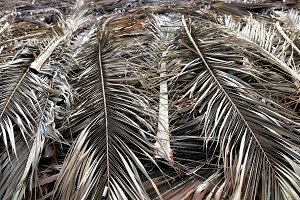 Folded Palm Branches