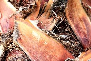 Tropical palm bark cut branches