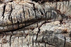 Palm tree bark texture