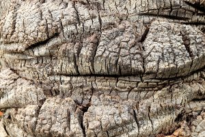 Tropical rough wood texture