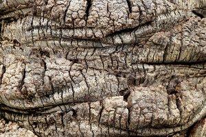 Palm tree bark texture.