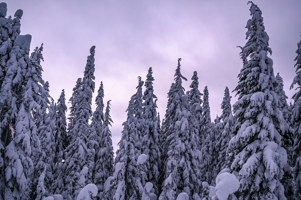Frosty trees in the mountains