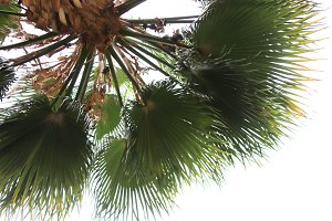 Exotic palm tree with branches