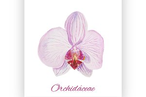 Orchid. watercolor painting