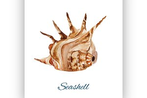 seashell. watercolor painting