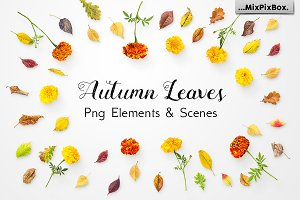 Autumn Leaves -Png Elements & Scenes
