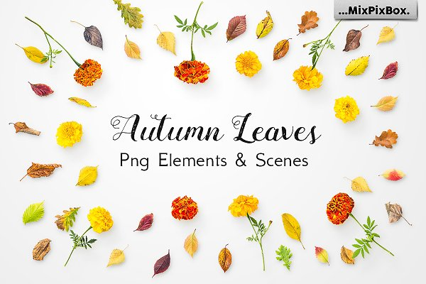 Autumn Leaves -Png Elements & Scene…