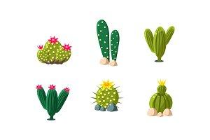Cactuses set, bright flowering