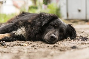 Homeless black dog lies on the green