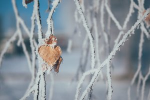 The frozen branches of the trees in