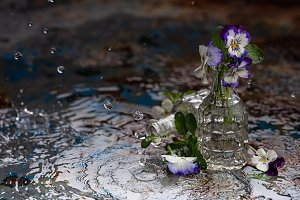 Glass vase with violet flowers in