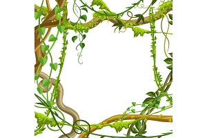 Twisted wild lianas branches frame.