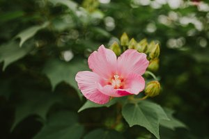 Pink flower foliage closeup