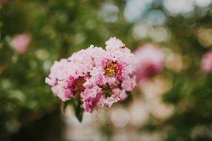 Flower hydrangea (Special)