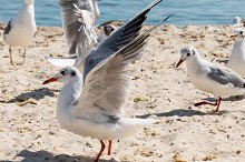 flock of seagulls on the beach by  in Animals