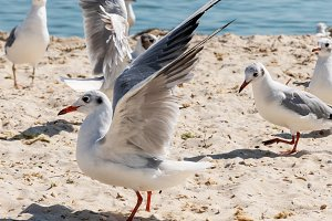 flock of seagulls on the beach