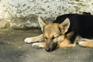 Dog sleeping outdoors