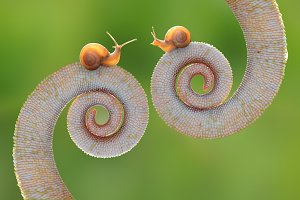 Snail on Tail Chameleon