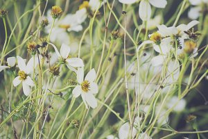 White Wildflowers Stock Photo